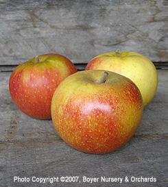 Hrf Apple Varieties